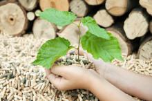 Formas beviljar drygt 70 miljoner till forskning om Biobaserad samhällsekonomi