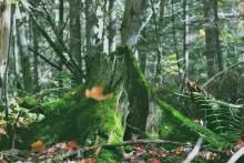 Nekades tillstånd att avverka skog – får 18 miljoner kronor i ersättning
