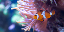 Akvariet fyller 90 år