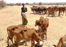 Kommentar: Tiernothilfe bei neuem Finanzierungsinstrument zur Bewältigung von Klimakatastrophen berücksichtigen