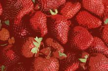 Europas största jordgubbe sätter extra färg på Vara