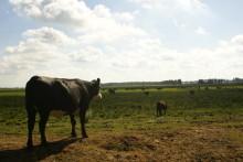 Långsiktighet och uthållighet borde vara ett mantra! (Efter gårdagens inslag om naturbetesmarker i Klotet i P1)