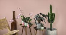 Interflora presenterar vårens kollektion