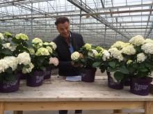 Trädgårdsprofilen Jurgen Smit pratar om den vita trädgårdshortensians färgändring i nytt filmklipp