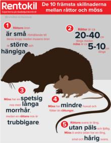 De 10 främsta skillnaderna mellan brunråtta och husmus
