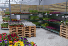 Blomsterlandet expanderar – öppnar butik i Örnsköldsvik