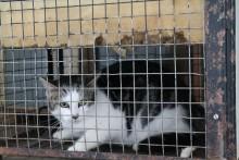 Kattens Værn oplever stor stigning i genudsætninger