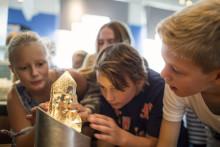 Stenkul heldag och titt bakom kulisserna. Det händer på Naturhistoriska riksmuseet i september.