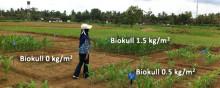 Biokull forbedrer avlinger og gir klimafordeler