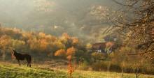 Halloweenresa till mystiska Transsylvanien