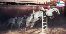 Om 365 dagar tar Europas bästa hästar och ryttare över i Göteborg
