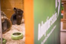 """Meilenstein für die Tiervermittlung – Tierheim Mannheim mit """"Adoptierstube"""""""