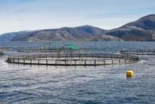 62 miljoner till forskning om hållbara produktionssystem inom vattenbruk, jord- och trädgårdsbruk