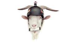 TomTom lanserar ny kampanj och digital tävling med geten Billy, även kallad Bääädass Bill