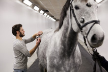 ​Sweden International Horse Show