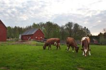 Ny rapport: Allt fler KRAV-märkta lantbrukare i Skåne