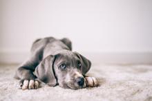 Mal eben Hunde, Rassekatzen oder Pferde pfänden? First Debit pflegt fairen Umgang mit Schuldnern