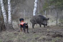 Ny försäkring för jakthunden