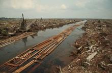 Alliansen splittrad om palmoljeprodukter i biodrivmedel