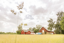City Gross satsar på fisk från svenska gårdar