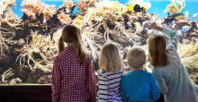 Fira World Oceans Day med Sjöfartsmuseet Akvariet