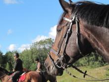 Siffror och fakta om hästnäringen