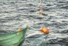 HaV utreder nytt system för fördelning av fiskemöjligheter