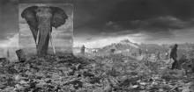Nick Brandts nya utställning larmar om hotet mot oss alla