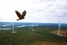 Wind farm guide will protect bird life