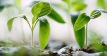 Plantbytardagar på Medborgarskolan