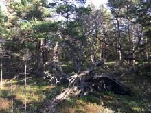 Brännefjäll - nytt naturreservat i Lilla Edet
