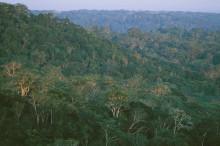 Alpro och WWF i gemensam kamp för skogen