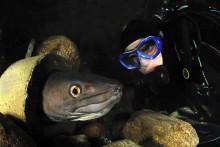 En ny bläckfiskart och nya havsålar och knaggrockor har flyttat in på Havets Hus.