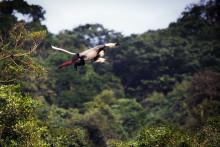 AccorHotels målsättning – 10 miljoner planterade träd till 2021