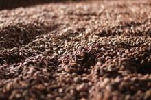 Clarion Hotel Post bjuder på Fairtradekaffe torsdagen den 15 oktober
