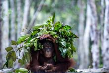 Inlärning gör djur intelligenta