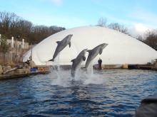 Tierschutzorganisation kritisiert Tiergarten Nürnberg wegen geschönter Besucherzahlen und fordert Beendigung der Delfinhaltung