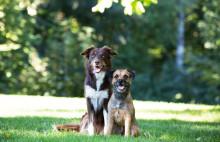 Sök stipendium till forskning om djurhälsa