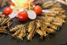 Gebratene Heuschrecken auf Nachos und Sourcream – extravagante Köstlichkeiten im ESPITAS Leipzig