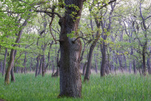 Verdens Skove: Hold igen med motorsavene indtil naturpakken er klar