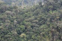 Investeringar för att minska den höga avskogningstakten i Peru
