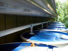 Rainwater Harvesting and Water Management Systems for Greener Living