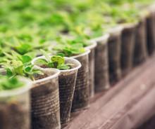 Malmöbor byter växter med varandra