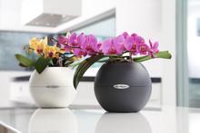 In voller Blüte: Prachtvolle Orchideen am Tag der Zimmerpflanzen