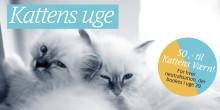 AniCura støtter Kattens Værns arbejde i uge 39!