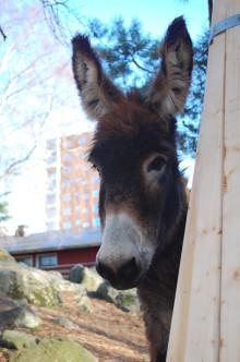 Stockholms alla parklekar på Djurens dag i Huddinge