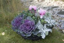Månadens Blomma - oktober 2010