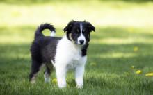 Vår hundförsäkring utsedd till Sveriges bästa!