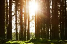 Pinfärskt miljömål ska ta BoKlok till klimatneutralitet senast 2035