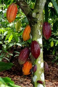 Mondelēz International Launches Cocoa Life Sustainability Program in Indonesia